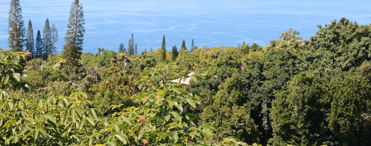Kona kaffe hawaii