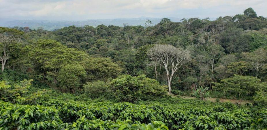 Kaffebønner Columbia